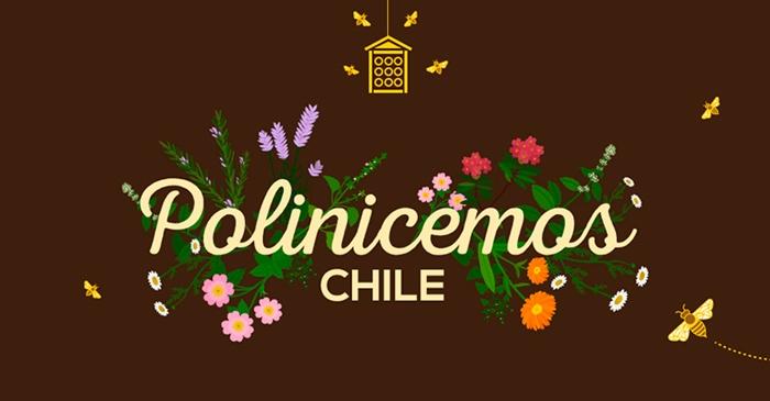 CAMPAÑA INVITA A PLANTAR FLORES EN TODO CHILE PARA AYUDAR A LAS ABEJAS A POLINIZAR